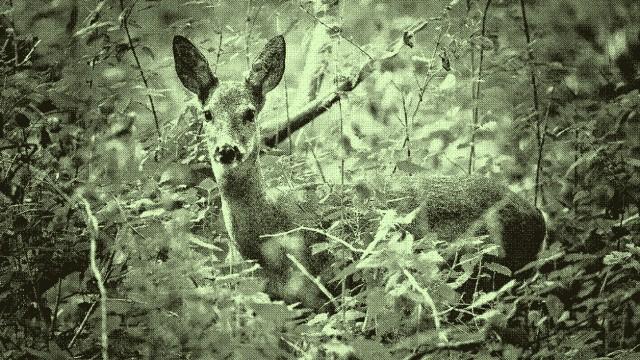 Im Herbst steigt Zahl der Wildunfälle