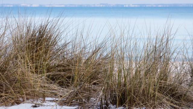 Beach grass on the Osrtsee coast, Niendorf / Baltic Sea, Timmendorfer Strand, Bay of Lübeck, Schleswig-Holstein, Germany