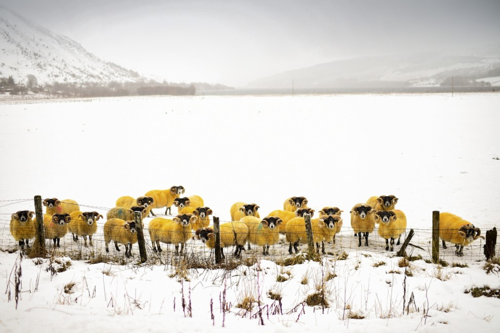 *** BESTPIX *** Scotland Issued With Amber Weather Warning For Snow