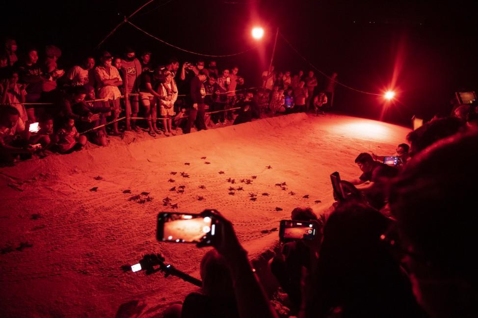 Sea Turtle Hatchlings Emerge On Thai Beach