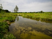 Renaturierung, Ausgleichsflächen im Landkreis
