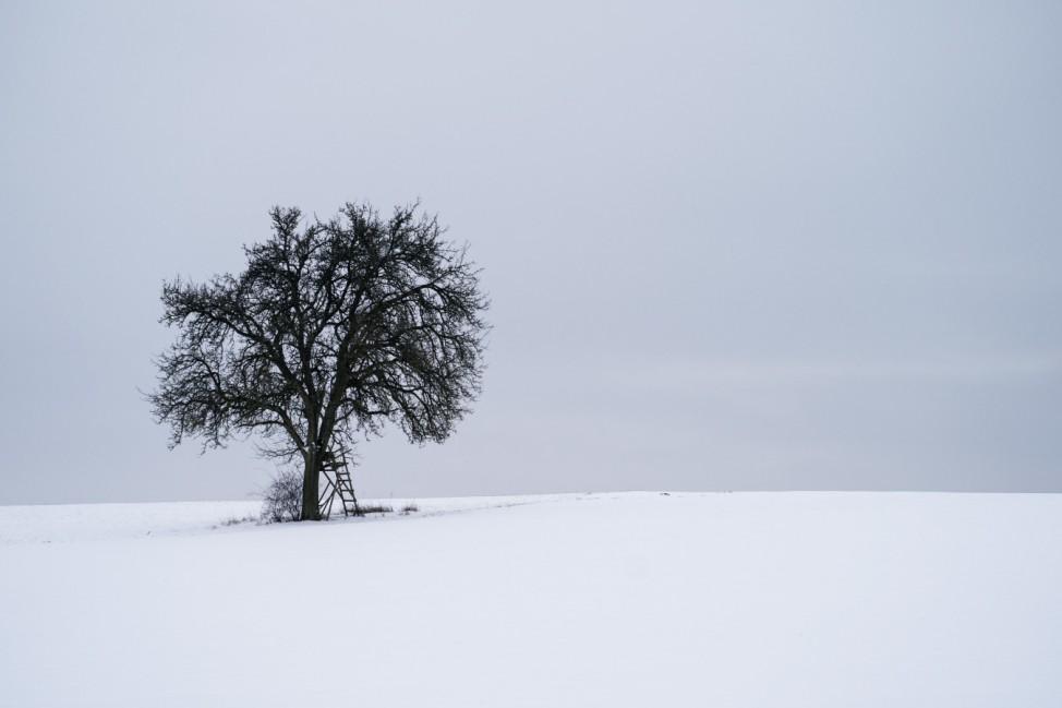 Alleinstehender Baum auf schneebedecktem Feld