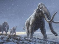 Eiszeit: Uraltes Erbgut deutet auf neue Mammut-Art hin
