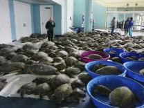 Texas: 4000 Schildkröten wärmen sich in Kongresszentrum auf