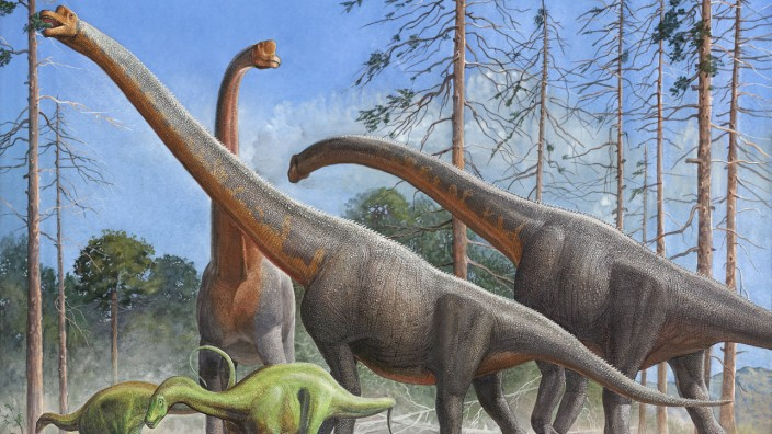 Giraffatitan and Dicraeosaurus dinosaurs grazing in a prehistoric environment PUBLICATIONxINxGERxSU