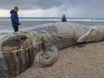 Umweltkatastrophe in Israel: Schwarzes Gift am Strand