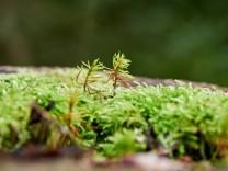 Klimawandel: Bäume, die überschätzten Klimaschützer