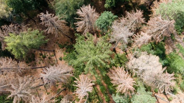 Auswirkung von Hitze auf den Wald