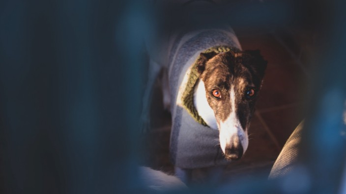 Visit to Las Nieves, a dog shelter that acommodates more than 700 dogs and 400 greyhounds. After healing and preparing t