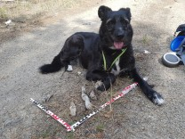 Hunde: Artenschützer Rex