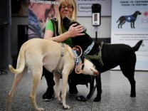 Corona-Spürhunde: Arbeitslose Schnüffel-Helden