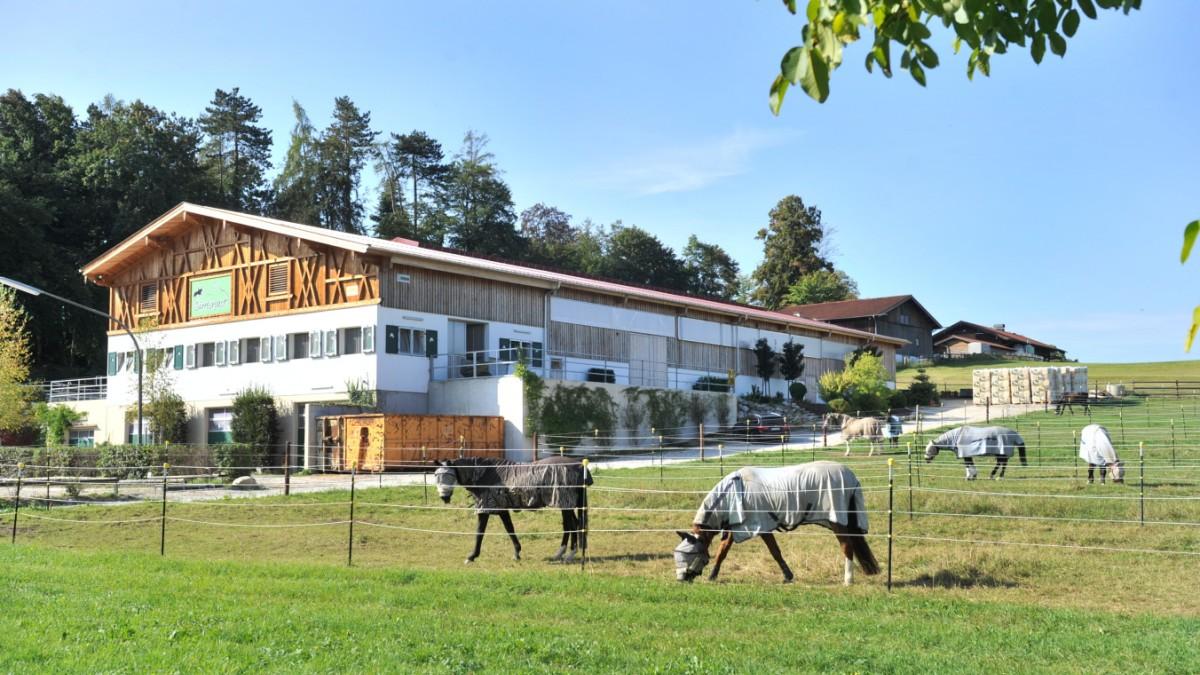 Berg zügelt Pferdehalter