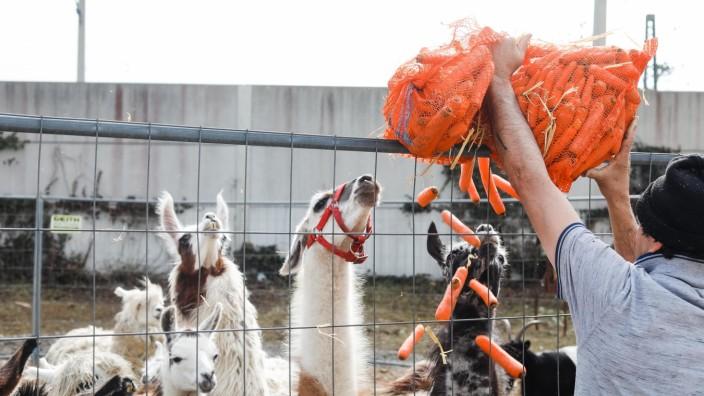 MAISACH: Circus Alfons William