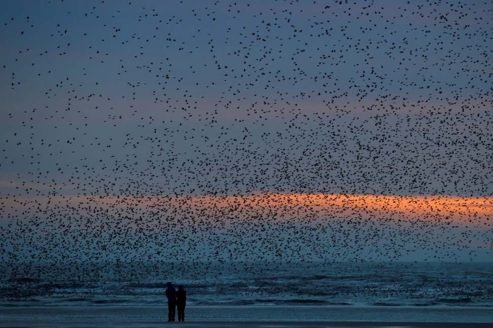 People watch a starling murmuration on the beach at Blackpool