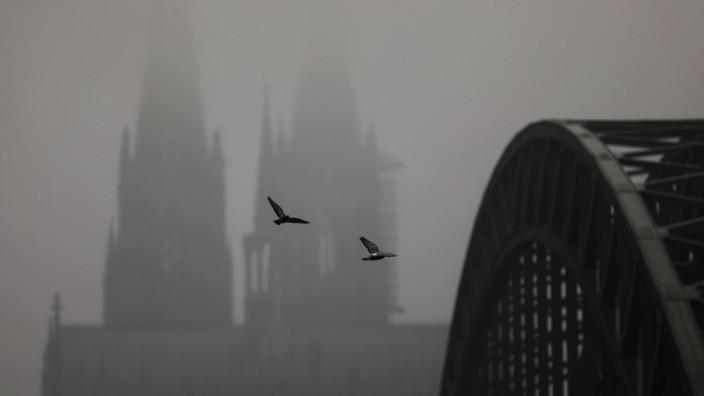 Nebel in Köln