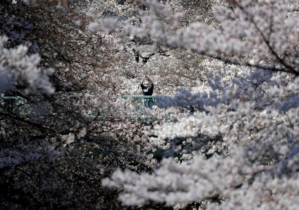 A man wearing a protective face mask looks at blooming cherry blossoms amid the coronavirus disease (COVID-19) pandemic, in Tokyo