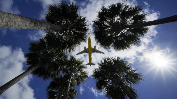 Flug über Palmen