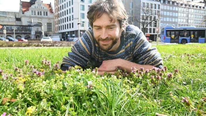 Wildblumen am Münchner Lenbachplatz