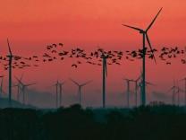 Klima- gegen Artenschutz: Müssen Windräder Vögel töten?