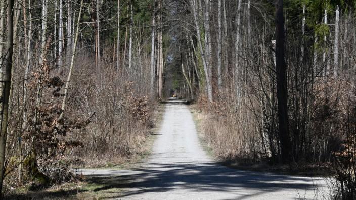 Wald zwischen Neuried und Gauting.