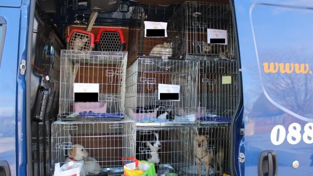 Hundetransporte Riem