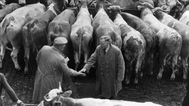 Viehhandel in München, 1959