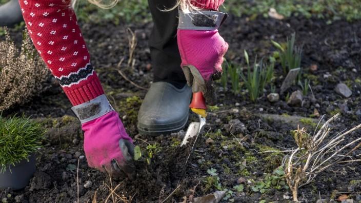 Frühjahrsarbeiten im Garten. Mittels einer kleinen Gartenschaufel, im Fachjargon schwere Pflanzkelle genannt, werden im