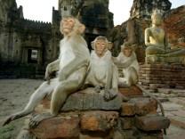 Thailand: Mein Ort, mein Tempel, mein Obst