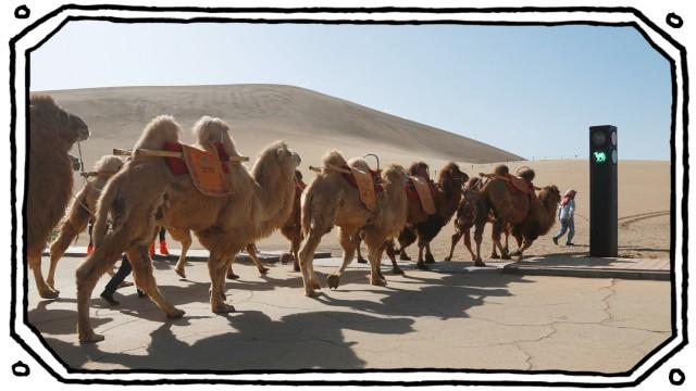 Kamel-Ampel