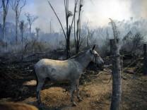 WWF-Bericht: Wie deutsche Importe die Tropenwälder zerstören