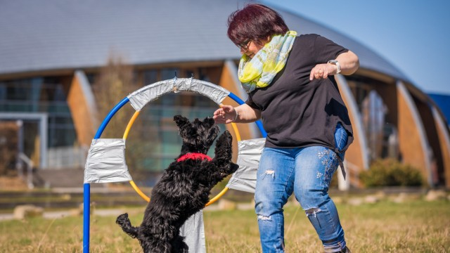 """Weltrekord im ´Reifensprung"""" für Hunde"""