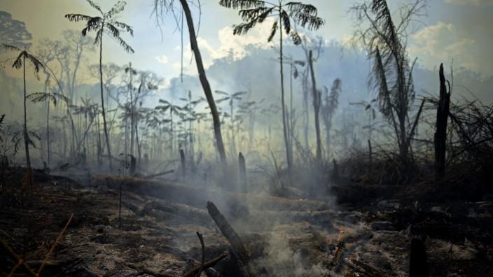 Umwelt: Zerstörter Regenwald im Amazonas