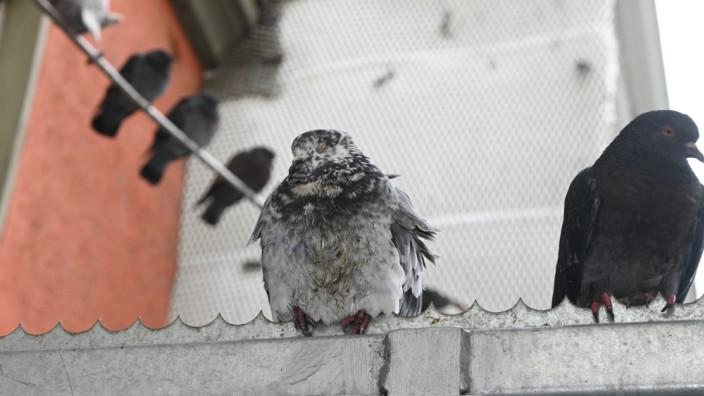 Tauben am HBF