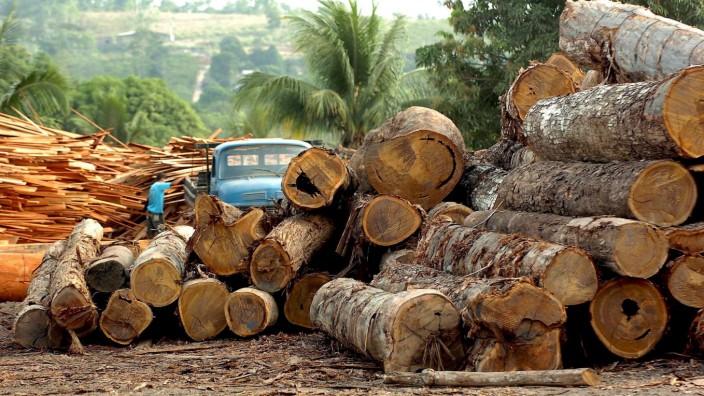 Lieferkettengesetz - Holzindustrie in Brasilien