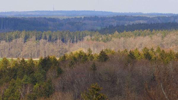 Ebersberg, Ebersberger Forst, vom Aussichtsturm