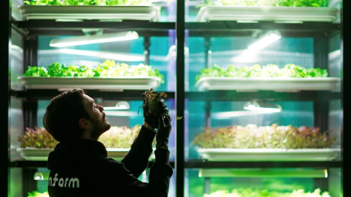 FILE PHOTO: An employee of the urban farming start-up Infarm checks an indoor growing system at the company's showroom in Berlin