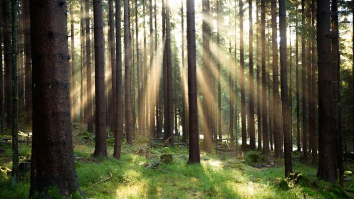 Staatsforsten haben 1,5 Millionen neue Bäume gepflanzt