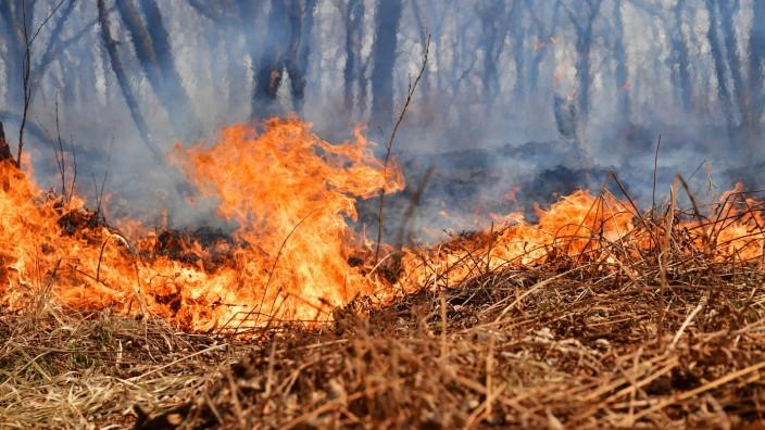 PRIMORYE TERRITORY, RUSSIA - APRIL 21, 2021: Wildfires rage near the village of Tavrichanka, 49km northwest of Vladivos