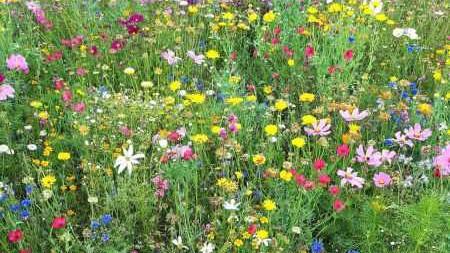 Combayn Baywa-Plattform zur Vermittlung von Blühflächen