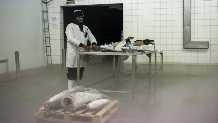 June 7 2016 Walvis Bay Namibia A worker of a fish processing factory stands near a table with