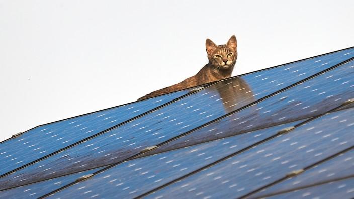 Katze auf Photovoltaikanlage in Bad Tölz, 2020