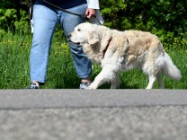 Leserdiskussion: Sollte der Hundeführerschein deutschlandweit Pflicht werden?