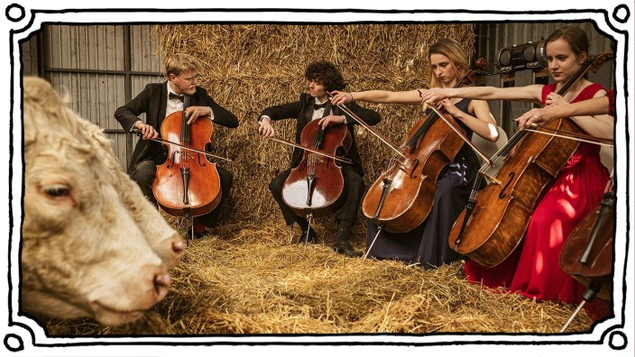 The Denmark Cow Concert