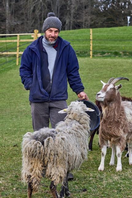 Schafe für Waldmuseum
