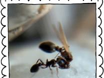 """SZ-Kolumne """"Bester Dinge"""": Wenn Ameisen daten"""
