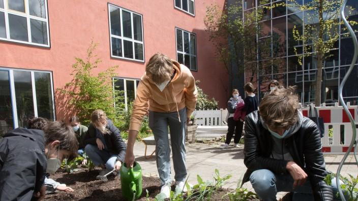 Neuer Gemüseacker im Innenhof des Gymnasiums Gräfelfing