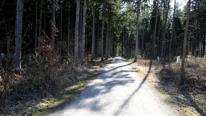 Wald zwischen Neuried und Gauting. Forst Kasten