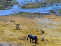 Bedrohte Arten: Wieder tote Elefanten in Botswana