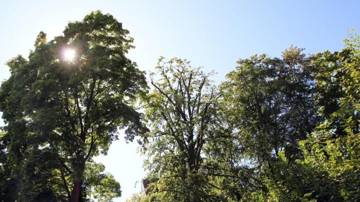 Kreisgartenfachberater Jürgen Ehrhardt; Thema Baumschutzverordnung