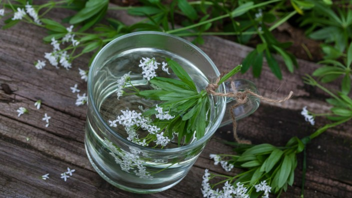 Waldmeister Duft Labkraut Duftlabkraut Galium odoratum Waldmeistertee Deutschland sweet woodru
